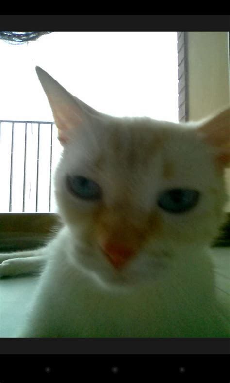 Snapcat - Android App - Download - CHIP