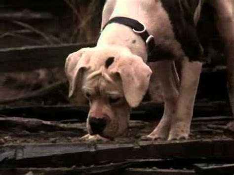 Homeward Bound : The Incredible Journey (partial ending