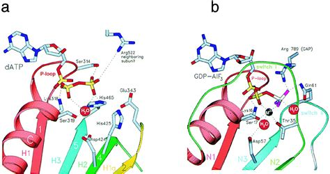 Crystal Structure of the Helicase Domain from the