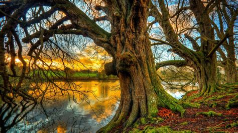 Old Trees Nature River Coast Roots Moss Sunset Sky Clouds