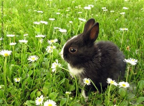 20 Cute bunny pictures (part 2) | Amazing Creatures
