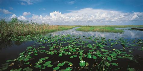 Why You Should Care About Everglades Restoration | Jane Graham